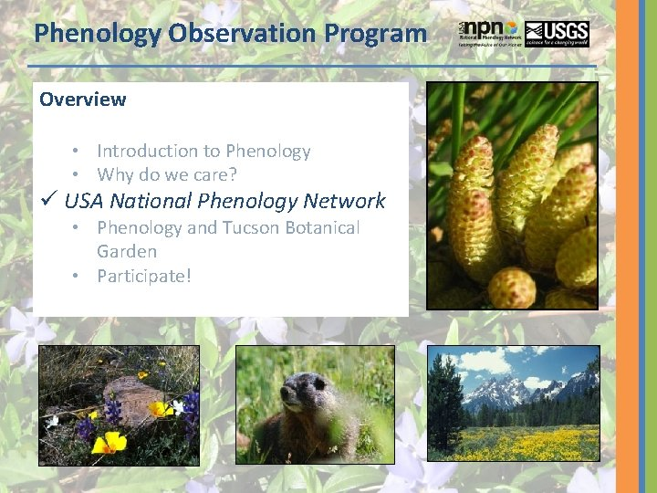 Phenology Observation Program Overview • Introduction to Phenology • Why do we care? ü