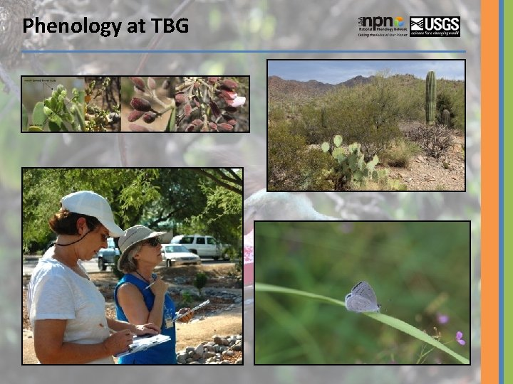 Phenology at TBG
