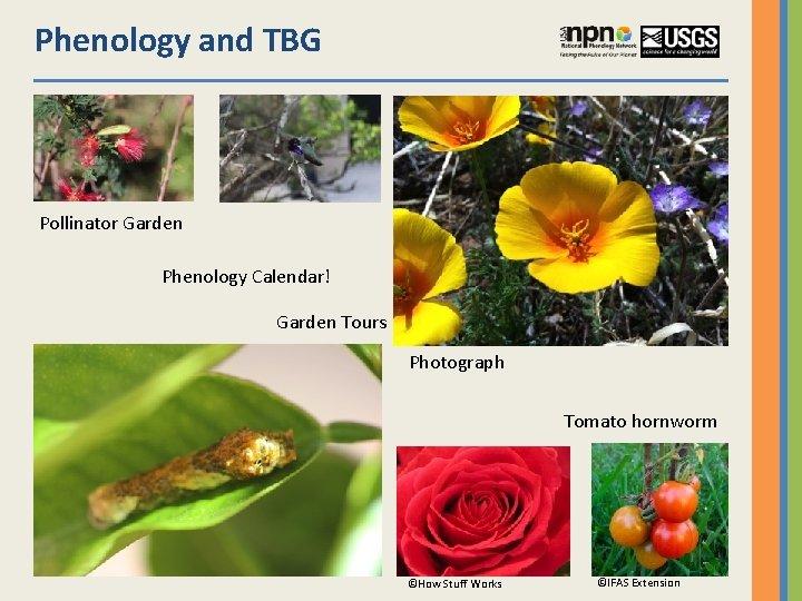 Phenology and TBG Pollinator Garden Phenology Calendar! Garden Tours Photograph Tomato hornworm ©How Stuff