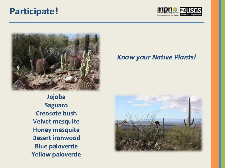 Participate! Know your Native Plants! Jojoba Saguaro Creosote bush Velvet mesquite Honey mesquite Desert
