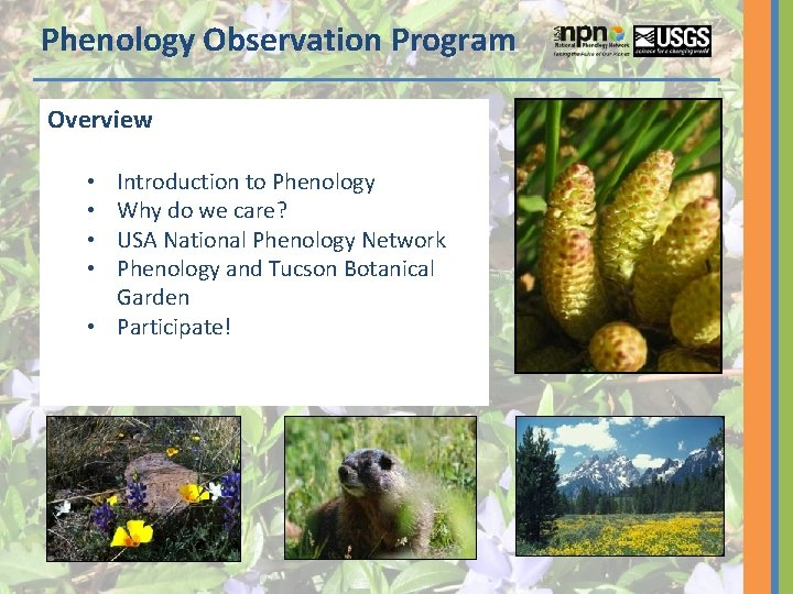 Phenology Observation Program Overview Introduction to Phenology Why do we care? USA National Phenology