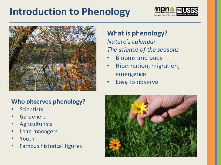 Introduction to Phenology What is phenology? Nature's calendar The science of the seasons •