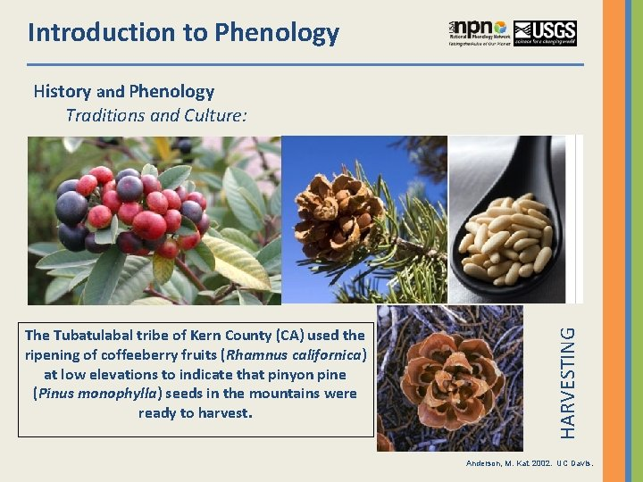 Introduction to Phenology The Tubatulabal tribe of Kern County (CA) used the ripening of