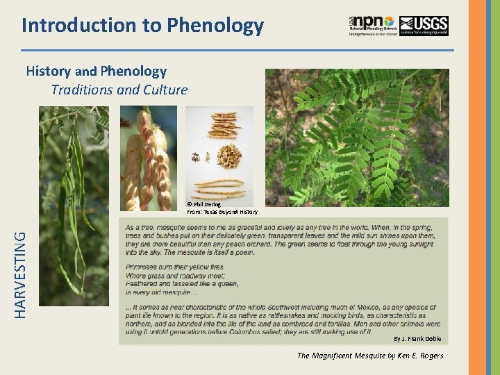 Introduction to Phenology History and Phenology Traditions and Culture HARVESTING © Phil Dering From: