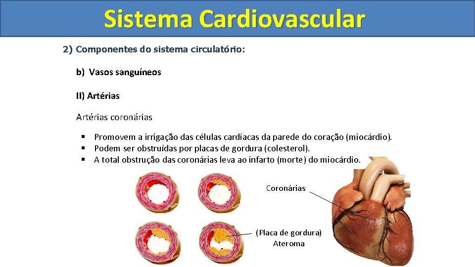 Sistema Cardiovascular Circulatório 2) Componentes do sistema circulatório: b) Vasos sanguíneos II) Artérias coronárias