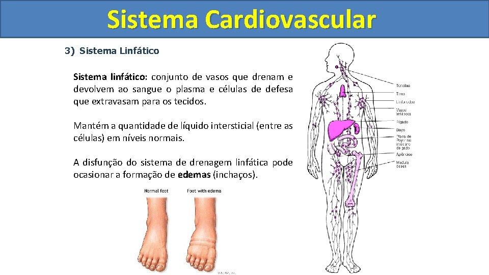 Sistema Cardiovascular Circulatório 3) Sistema Linfático Sistema linfático: conjunto de vasos que drenam e