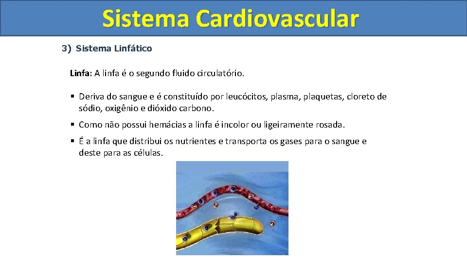 Sistema Cardiovascular Circulatório 3) Sistema Linfático Linfa: A linfa é o segundo fluido circulatório.