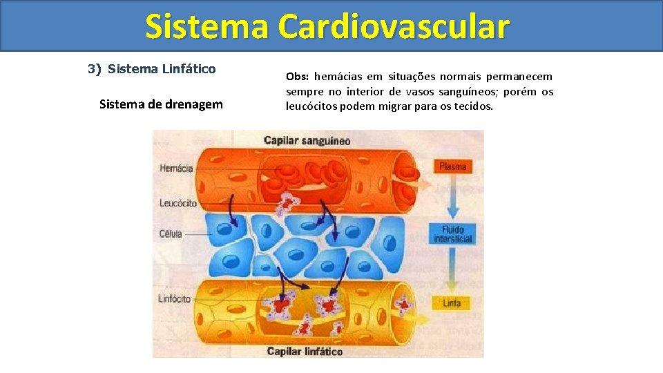 Sistema Cardiovascular Circulatório 3) Sistema Linfático Sistema de drenagem Obs: hemácias em situações normais