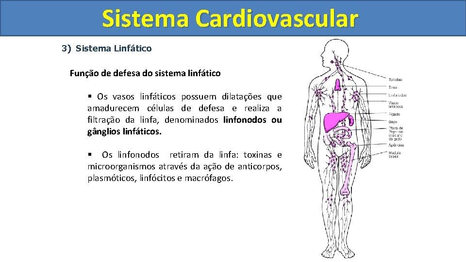 Sistema Cardiovascular Circulatório 3) Sistema Linfático Função de defesa do sistema linfático § Os