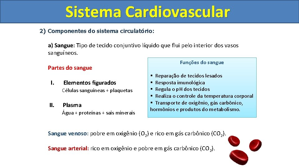 Sistema Cardiovascular Circulatório 2) Componentes do sistema circulatório: a) Sangue: Tipo de tecido conjuntivo