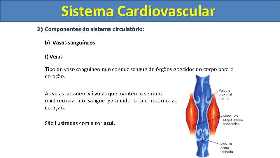 Sistema Cardiovascular Circulatório 2) Componentes do sistema circulatório: b) Vasos sanguíneos I) Veias Tipo