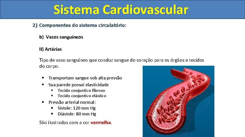 Sistema Cardiovascular Circulatório 2) Componentes do sistema circulatório: b) Vasos sanguíneos II) Artérias Tipo