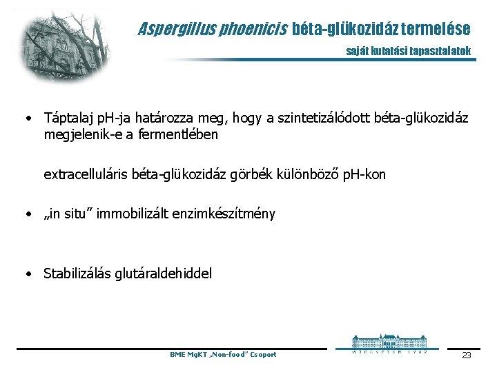 Aspergillus phoenicis béta-glükozidáz termelése saját kutatási tapasztalatok • Táptalaj p. H ja határozza meg,