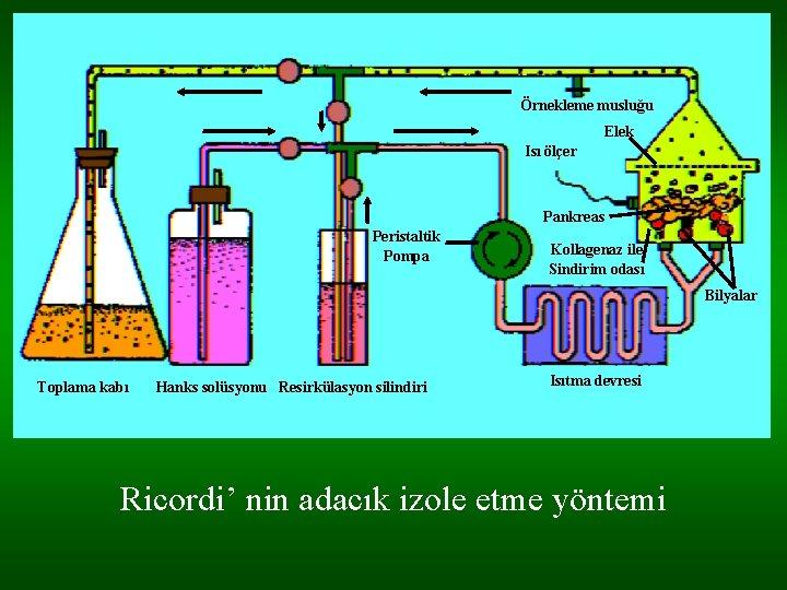 Örnekleme musluğu Elek Isı ölçer Pankreas Peristaltik Pompa Kollagenaz ile Sindirim odası Bilyalar Toplama