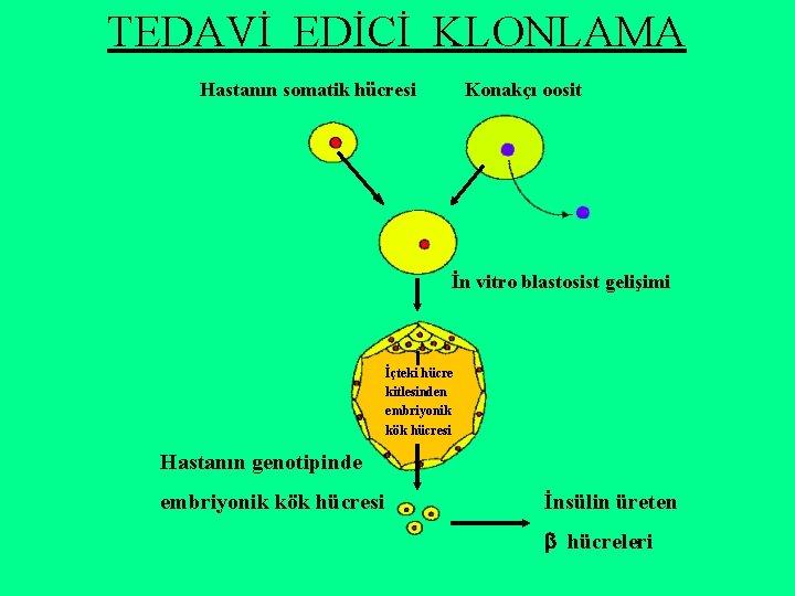 TEDAVİ EDİCİ KLONLAMA Hastanın somatik hücresi Konakçı oosit İn vitro blastosist gelişimi İçteki hücre