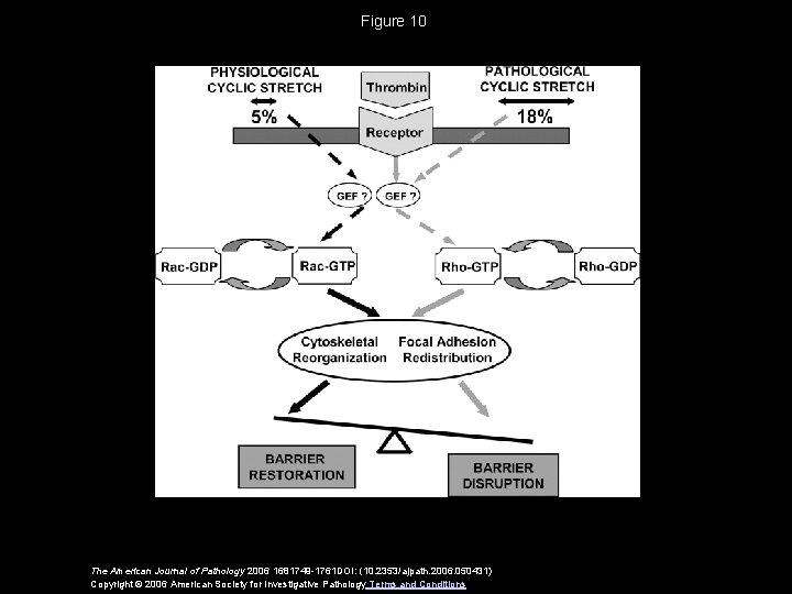 Figure 10 The American Journal of Pathology 2006 1681749 -1761 DOI: (10. 2353/ajpath. 2006.