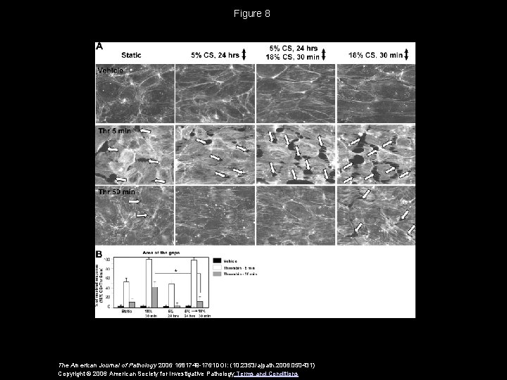 Figure 8 The American Journal of Pathology 2006 1681749 -1761 DOI: (10. 2353/ajpath. 2006.