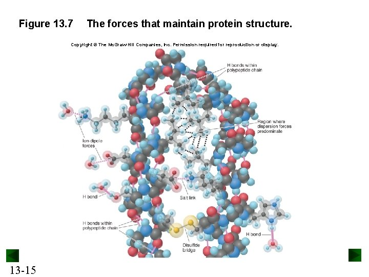 Figure 13. 7 The forces that maintain protein structure. Copyright © The Mc. Graw-Hill