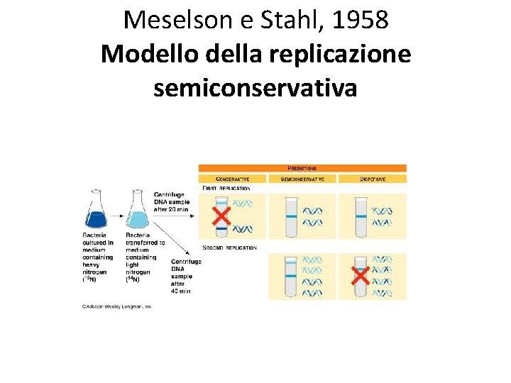 Meselson e Stahl, 1958 Modello della replicazione semiconservativa