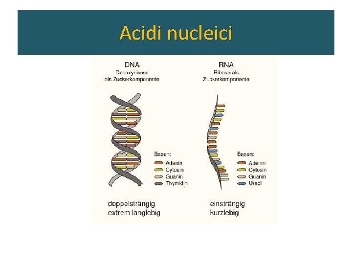 Gli acidi nucleici Acidi nucleici