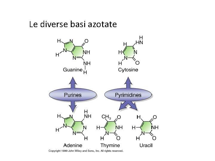 Le diverse basi azotate