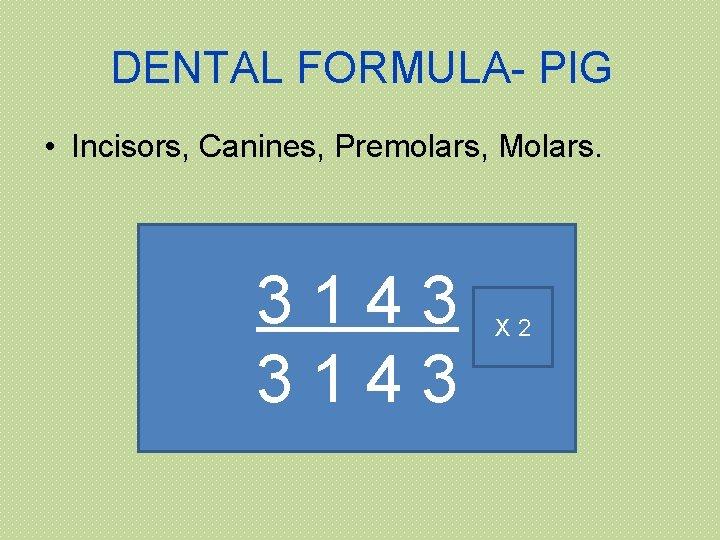 DENTAL FORMULA- PIG • Incisors, Canines, Premolars, Molars. 3143 X 2