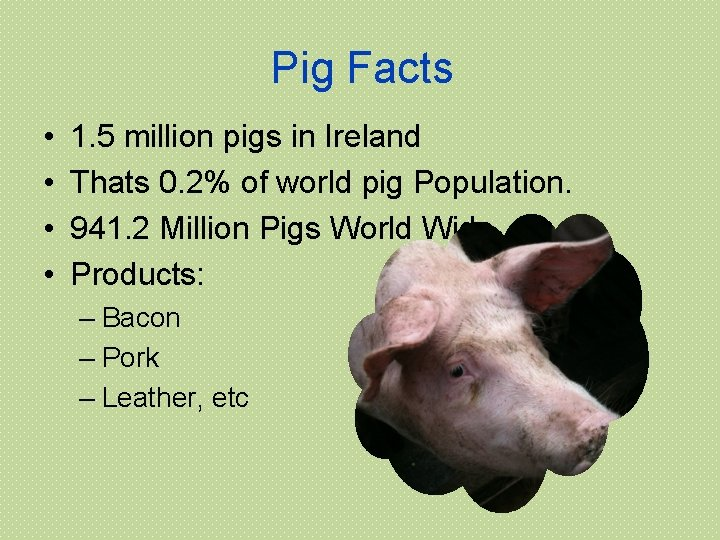 Pig Facts • • 1. 5 million pigs in Ireland Thats 0. 2% of