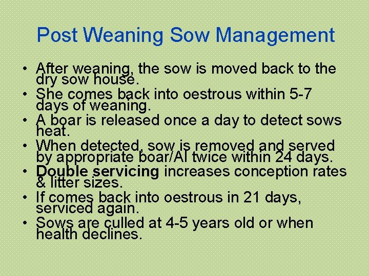 Post Weaning Sow Management • After weaning, the sow is moved back to the