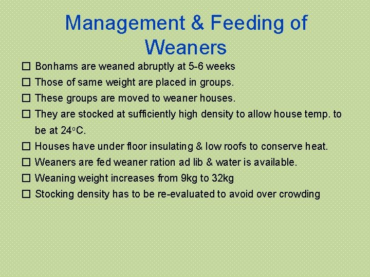 Management & Feeding of Weaners � Bonhams are weaned abruptly at 5 -6 weeks