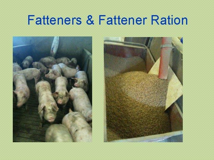 Fatteners & Fattener Ration