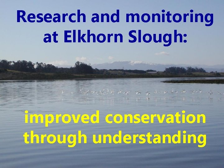 Research and monitoring at Elkhorn Slough: improved conservation through understanding