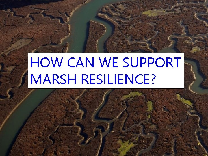 HOW CAN WE SUPPORT MARSH RESILIENCE?