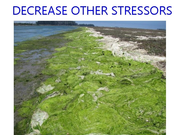 DECREASE OTHER STRESSORS