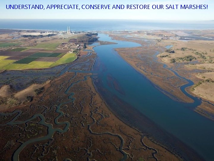 UNDERSTAND, APPRECIATE, CONSERVE AND RESTORE OUR SALT MARSHES!