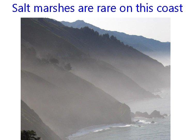 Salt marshes are rare on this coast