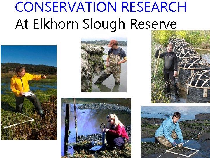 CONSERVATION RESEARCH At Elkhorn Slough Reserve