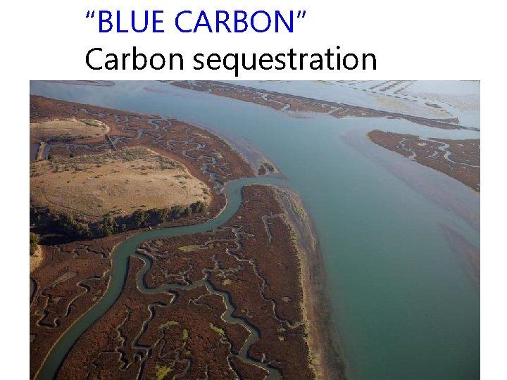 """""""BLUE CARBON"""" Carbon sequestration"""