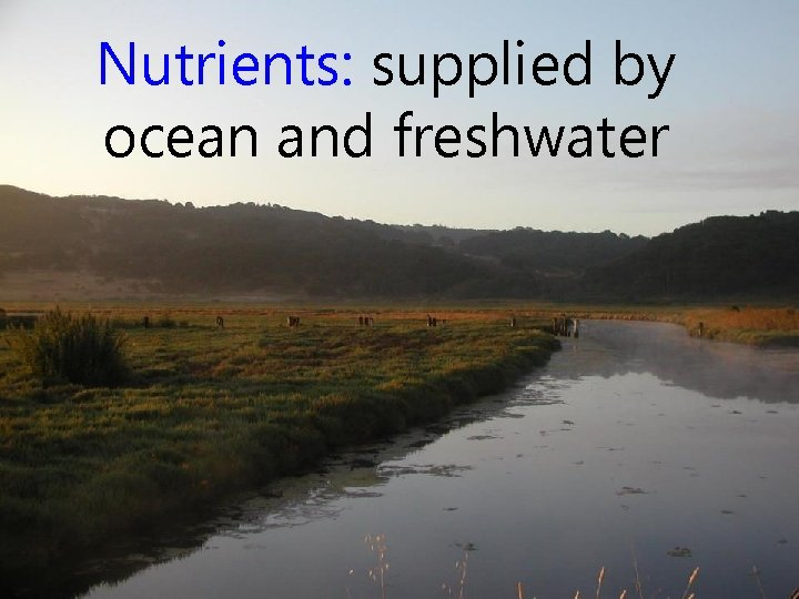 Nutrients: supplied by ocean and freshwater
