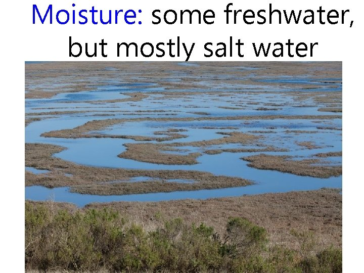 Moisture: some freshwater, but mostly salt water