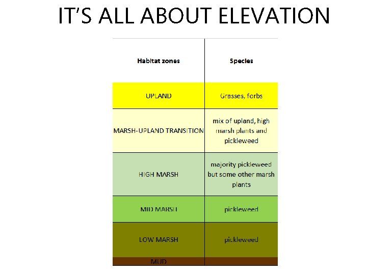 IT'S ALL ABOUT ELEVATION