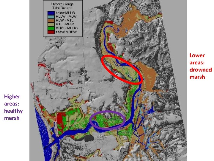 Lower areas: drowned marsh Higher areas: healthy marsh