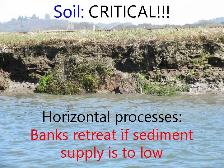 Soil: CRITICAL!!! Horizontal processes: Banks retreat if sediment supply is to low