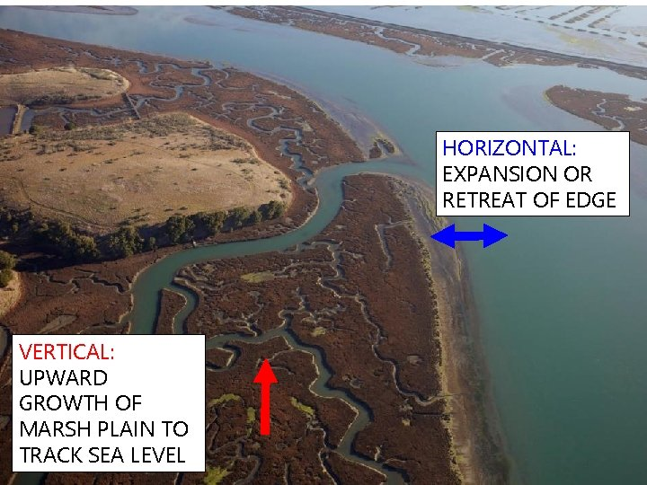 HORIZONTAL: EXPANSION OR RETREAT OF EDGE VERTICAL: UPWARD GROWTH OF MARSH PLAIN TO TRACK