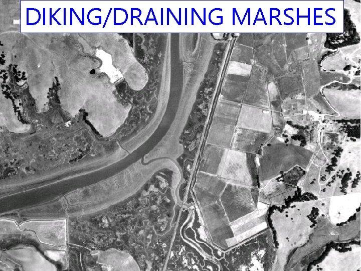 DIKING/DRAINING MARSHES