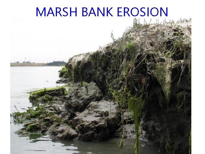 MARSH BANK EROSION