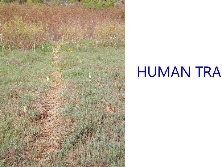 HUMAN TRAI