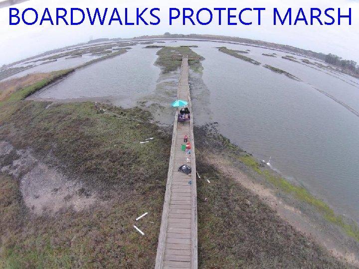 BOARDWALKS PROTECT MARSH