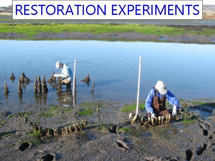 RESTORATION EXPERIMENTS
