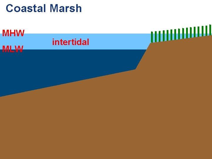 Coastal Marsh MHW MLW intertidal