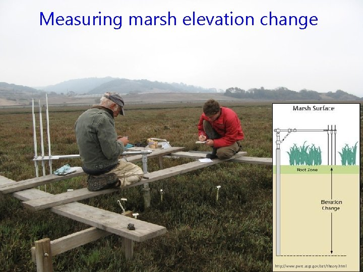 Measuring marsh elevation change http: //www. pwrc. usgs. gov/set/theory. html